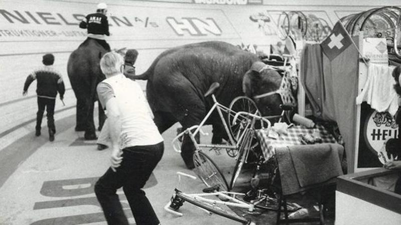 elefant1976_2